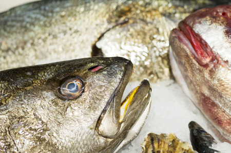 croaker meagre  in fish market close up Stock Photo