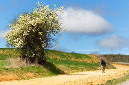 Way of St James , Camino de Santiago , Compostela , arriving at Astorga ,Spain Stock Photo