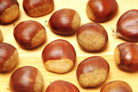 fagaceae: chestnuts on  white background