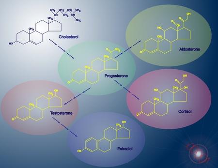 hormonas: Esteroidog�nesis