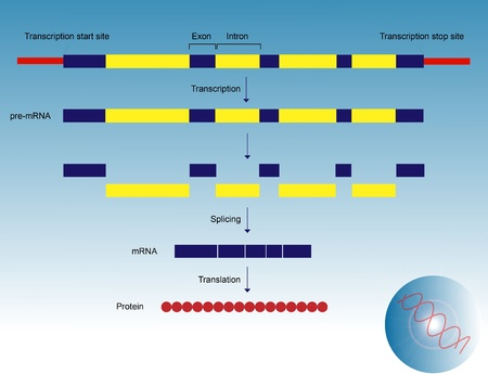 transcription: Gene expression Stock Photo