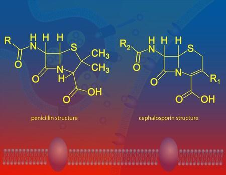 penicillin: β-lactam antibiotics