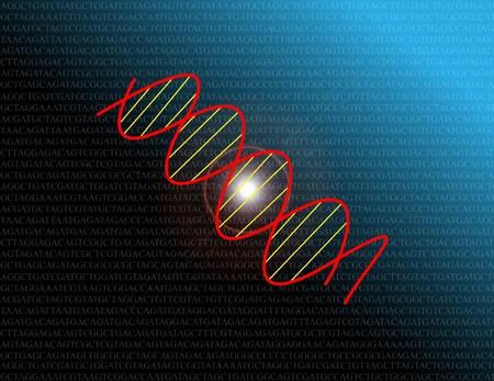 thymine: DNA code