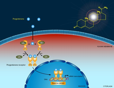 progesterone: Progesterone signaling pathway Stock Photo