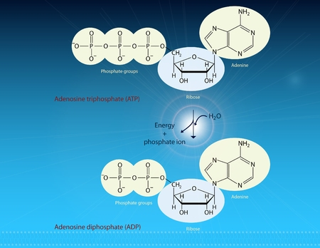 adenine: ATP and energy production Stock Photo