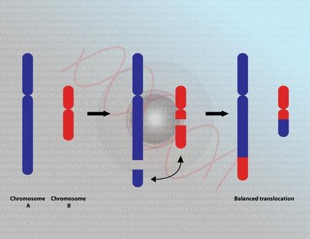 chromosomal: Chromosomal translocation Stock Photo