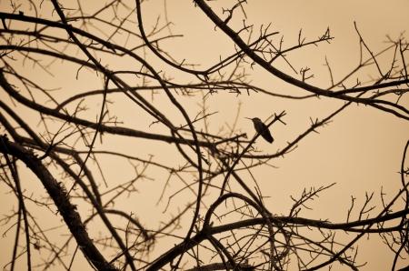 limbs: Hummingbird Perched in Tree Limbs Stock Photo