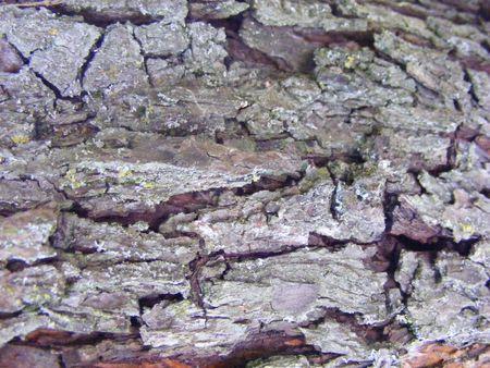 trunk texture Stock Photo