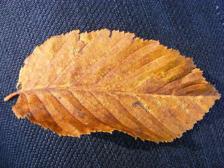 yellow leaf on dark blue material