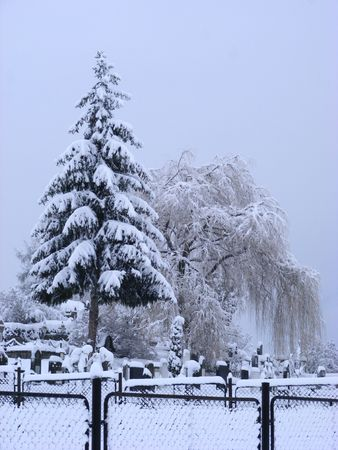 Cemetery in winter with pine and willow Stock Photo