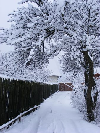 winer road and tree