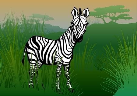 omnivore: Zebra in the savanna