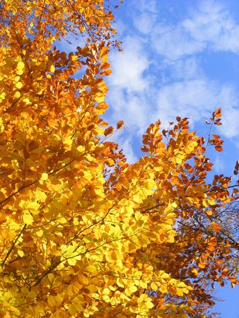 Yellow leafs on blue sky Stock Photo - 8246364