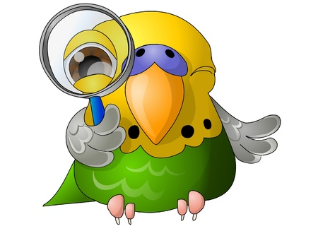 budgerigar: green budgerigar with magnifying glass