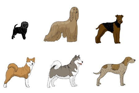 afghan: Affenpinscher, Afghan hound, Airedale terier, Akita, American english coonhound, Alaska malamute,