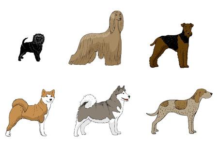 afghane: Affenpinscher, Afghanischer Windhund, Airedale terier, Akita, amerikanisches Englisch coonhound, Alaska Malamute, Illustration