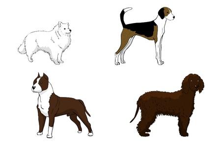 eskimo dog: American Eskimo Dog, American Staffordshire Terrier, American Foxhound, American Water Spaniel