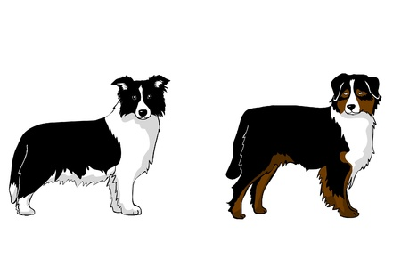 australian sepherd, border collie Vector