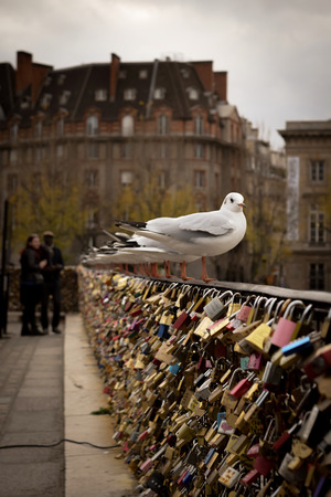 Locks and seagulls on Pont des Arts Paris Stock Photo