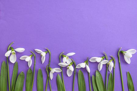 Snowdrops ona purple background