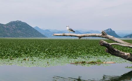 Lake Skadar, Montenegro Stock Photo