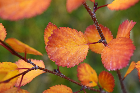 Autum leaf closeup Stock Photo