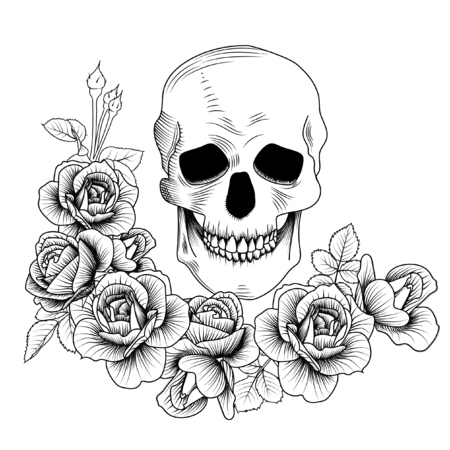 Skull with roses, line drawing