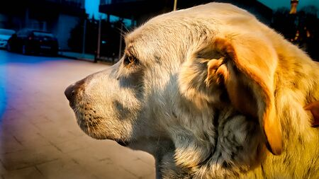Dog staring at a point and thinking on street at night Zdjęcie Seryjne