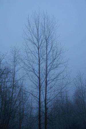 Twilight Tree Фото со стока