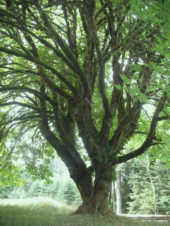 intertwined: Entangled Tree