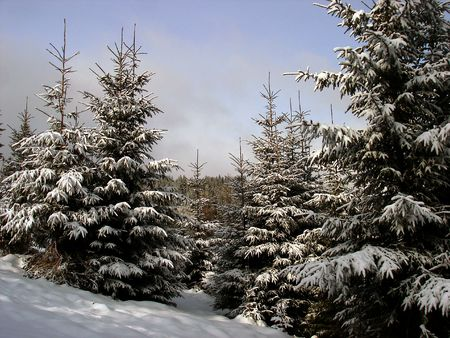 snow covered mountains:       Winter scene