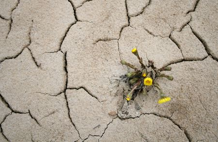 Yellow flower growing in hostile conditions Stock Photo - 2736099