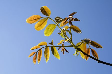 Bright colorful leaves against blue sky photo
