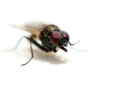 insectiside:      Close up on fly