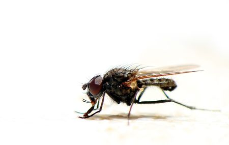 Close up on fly Stock Photo - 3159844