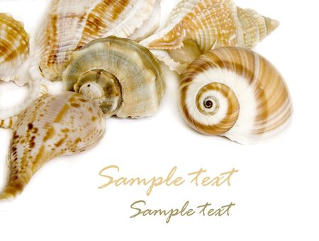 Seashells on white with a lot of copy space Stock Photo - 3205836