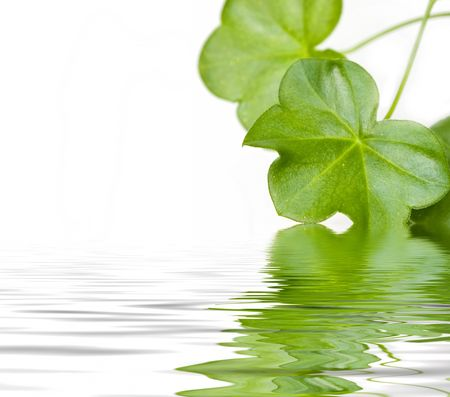 Green leaves reflectin in water photo