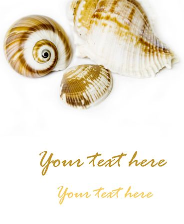 Seashell on white with a lot of copy space Stock Photo - 3264122