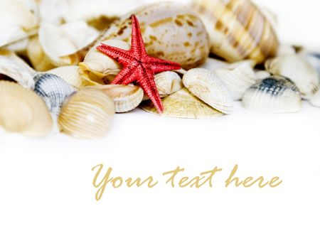 Seashell on white with a lot of copy space Stock Photo - 3263231