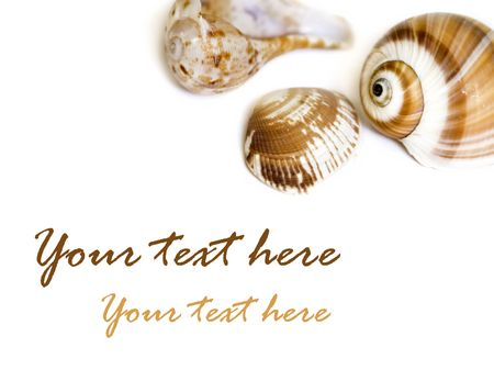 Seashell on white with a lot of copy space Stock Photo - 3263230