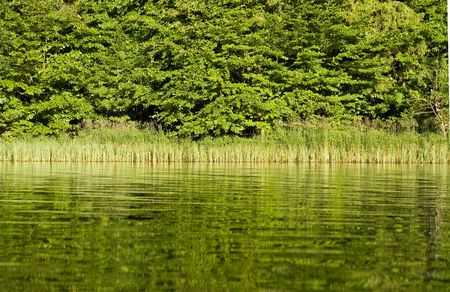 reflecting: Forest reflecting in lake
