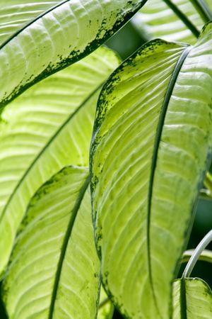 venation: Green leaves Stock Photo
