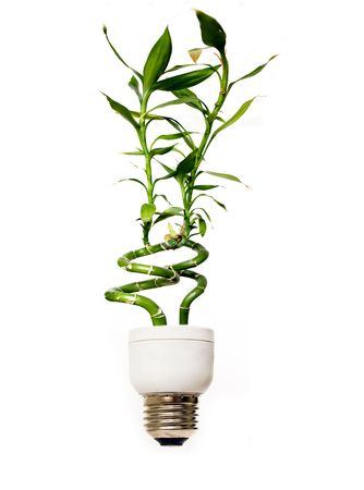 compact fluorescent lightbulb: Eco light bulb with green bamboo
