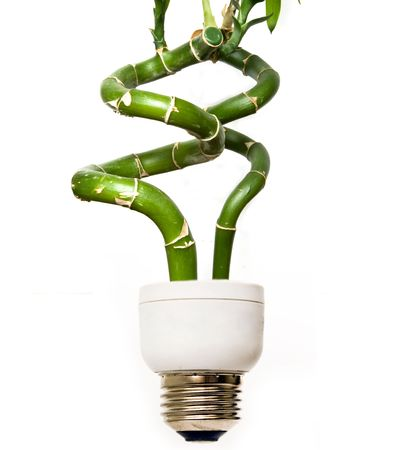 Eco light bulb with bamboo Stock Photo - 3619387