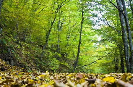 Forest Stock Photo - 3674051