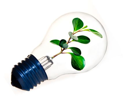 Fresh green plant inside a light bulb symbolizing clean energy photo