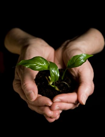 replant: Plant in hands