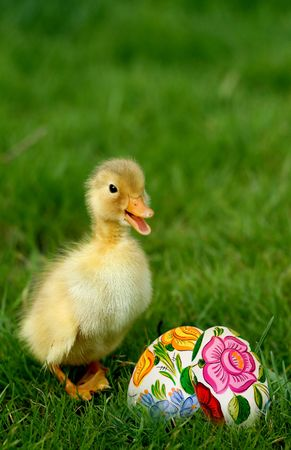 Cute little duckling and easter eggs in grass Stock Photo - 4571780