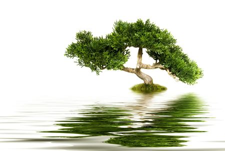 Tree reflecting in water photo