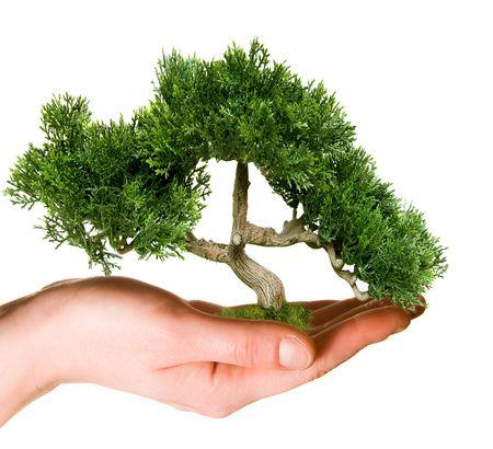 nurture: Tree held in hand